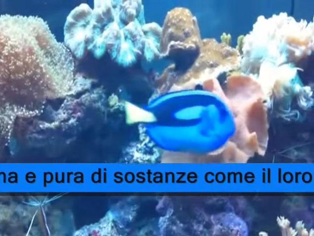 Plafoniere Led Per Acquario Marino : Plafoniere a led per acquario marino lampade