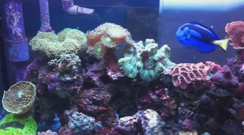 Plafoniere A Led Usate Per Acquari Marini : Vendita coralli online acquario marino e dolce coraldream